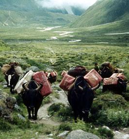 Karawana do bazy pod Lhotse